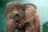 Aksi prihatin atas ancaman kepunahan gajah warnai Hari Satwa Sedunia