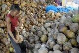 Permintaan kelapa dari Desa Sulang Klungkung meningkat