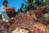 Indonesia dapat dukungan FAO-IFAD terkait diskriminasi produk kelapa sawit