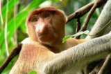 Balikpapan (ANTARA News Kaltim) - Organisasi dunia, Association for Tropical Biologi and Balikpapan (ANTARA News Kaltim) - Conservation (Asosiasi Biologi Dan Konservasi Tropis) belum lama ini mengeluarkan resolusi internasional yang menyoroti ancaman perusakan lingkungan di kawasan pesisir Balikpapan (Kaltim) jika mega proyek Pulau Balang tetap dilanjutkan sesuai desain awalnya.