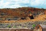 Samarinda (ANTARA News - Kaltim) - Berbagai aktifitas baik pembukaan lahan untuk perkebunan maupun batu bara serta illegal logging kini menjadi ancaman bagi kelestarian di Teluk Balikpapan. Tampak lahan gundul untuk