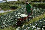 Harga bawang merah-sayur naik di Agam