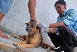 Pemkab Meminta Pemilik Vaksinasi Hewan Penular Rabies