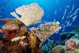Ekspor karang hias tembus pasar Eropa dan Asia