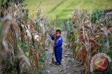 PBB sampaikan kekhawatiran krisis pangan di Korea Utara