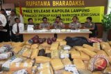 Polisi Sita 1,5 Ton Ganja dan Enam Kilogram Shabu