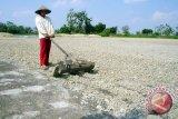 Ketersediaan Pupuk Organik Lampung Selatan Melimpah