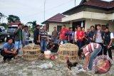 Polresta Pagaralam tangkap 11 penjudi sabung ayam