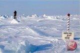 Studi : Es Kutub mencair, beruang.kelaparan