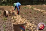 Kemenko Perekonomian: Rp116,4 triliun KUR telah disetujui