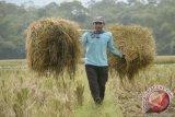 IPB: petani diimbau kembalikan jerami ke sawah
