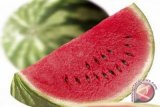 Petani pesisir Kulon Progo panen raya semangka