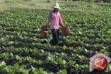 Bantul sediakan obat-obatan pertanian antisipasi kerusakan tanaman