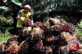 China menyetujui peningkatan volume impor sawit dari Indonesia
