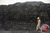 Pengamat nilai pencabutan DMO hanya untungkan pengusaha batubara