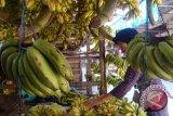 Tekanan darah Anda tinggi? Konsumsi sayuran dan buah