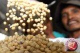DIY siap fasilitasi petani kembali menanam kedelai