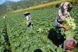 Mitos atau fakta makanan organik melindungi diri dari kanker