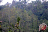 Perubahan iklim diidentifikasi sebagai ancaman terbesar buat katak tropis
