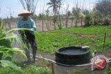 Petani Kulon Progo tanam semangka kuning