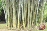 Dewan Bambu harapkan pengakuan standar kualitas