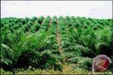 LSM Kecam Perkebunan Sawit Di Suaka Margasatwa