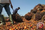 Pengusaha Singapura jajaki investasi cangkang sawit di Bangka