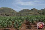 Gunung Kidul menjadi Pusat Sekretariat Geopark Gunungsewu