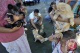 Warga mukomuko diminta ikat anjing peliharaan