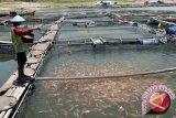 BBI Bantul produksi 2,6 juta bibit ikan