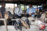 Pemkot Palembang imbau warga teliti beli hewan kurban