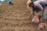 Petani diharap tularkan pengetahuan kepada generasi muda
