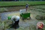 Pemkab mengharapkan petani memaksimalkan resi gudang Niten