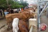 Gunung Kidul menyusun DED tempat sterilisasi hewan