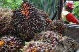 Importir minyak sawit India hentikan pembelian dari Malaysia