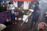 Yogyakarta ingatkan warga waspadai gejala awal penularan DB