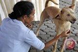 Meracun Anjing Liar di Mukomuko