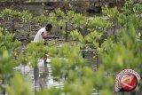 LIPI: hadang tsunami dengan mangrove