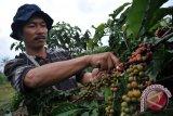 Harga kopi bubuk di Palembang naik