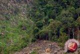 BPBD: kemarau basah tidak menyebabkan kebakaran hutan