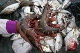 UGM mengolah limbah udang menjadi closet sanitizer
