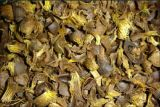 Indonesia siap penuhi kebutuhan cangkang sawit dan pelet kayu Jepang
