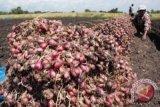 Harga bawang merah basah Sleman anjlok