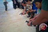 Menhut Lepas Anak Penyu Di Pantai Patuno Wakatobi