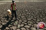 BMKG: Yogyakarta berpotensi terjadi kekeringan meteorologis