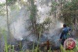 Sebanyak 20 Titik Panas Masih Kepung Riau
