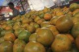 Jeruk Siam madu asal Brasrtagi diminati konsumen di Lhokseumawe Aceh
