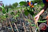 Masyarakat diminta kelola hutan secara legal melalui Program Perhutanan Sosial