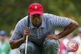 Tiger Woods terhenti di perempat final Match Play