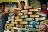 Pegawai menyusun barang bukti Ganja kering di Polres Jakarta Utara, Rabu (16/10). Satuan Resnarkoba Polres Jakarta Utara berhasil menangkap seorang pengedar ganja berinisial AM dengan barang bukti 66 kilogram Ganja kering senilai Rp 330. 000. 000. ANTARA FOTO/Ujang Zaelani